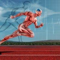 Что такое мышечная память, как она работает и как ее развить