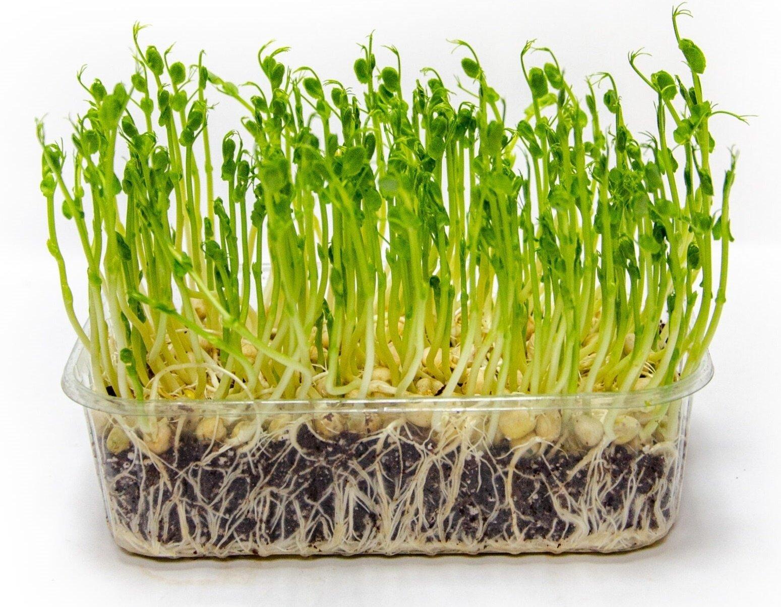 Преимущества и особенности свежей зелени